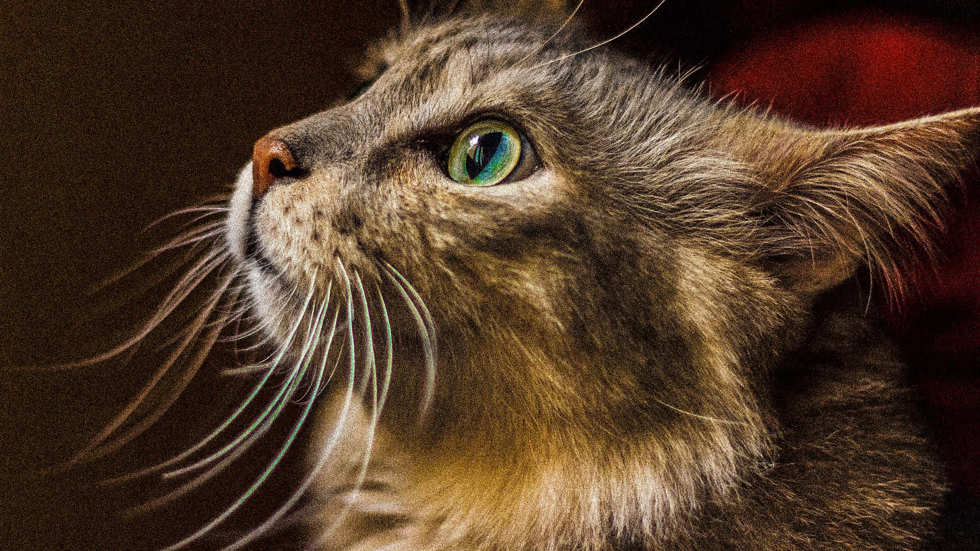¡Conoce un poco más a tu gato! Las curiosidades que los hacen especiales